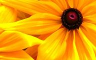 Yellow Flower Wallpapers  1 Desktop Wallpaper