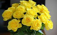 Yellow Rose Wallpaper  37 Free Hd Wallpaper