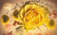Yellow Rose Wallpaper Border  16 Desktop Background