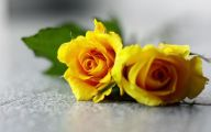 Yellow Rose Wallpapers  15 Background Wallpaper