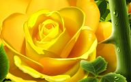 Yellow Rose Wallpapers  19 Background