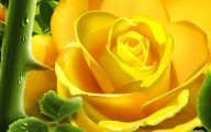 Yellow Rose Wallpapers  2 Background