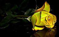 Yellow Rose Wallpapers  8 Desktop Wallpaper