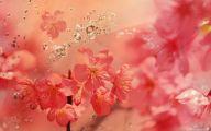 2K Flower Wallpapers  34 High Resolution Wallpaper