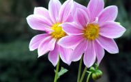 4K Flower Wallpapers  12 Free Hd Wallpaper