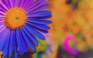 4K Flower Wallpapers  13 Cool Wallpaper