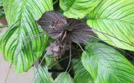 Bat Orchid 4 Widescreen Wallpaper