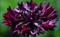 Black Flower Gardens  2 Free Wallpaper