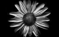 Black Flowers In California  37 Cool Wallpaper