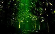 Black Flowers In Deep Jungle  33 Free Hd Wallpaper