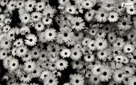 Black Flowers In Nature  32 Widescreen Wallpaper