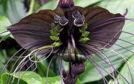Black Flowers Pictures  1 Desktop Background