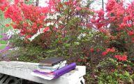 Black Petals Flowers Kenya  20 Free Hd Wallpaper