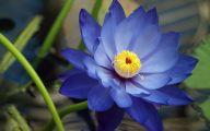 Blue Flower Arts  48 Hd Wallpaper