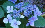 Blue Flower Arts Llc  16 Desktop Wallpaper