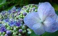Blue Flower Arts Llc  21 Cool Wallpaper