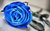 Blue Rose Flower  1 Background