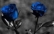 Blue Rose Flower Images  5 Cool Hd Wallpaper