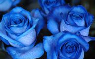 Blue Rose Flowers  14 Free Wallpaper