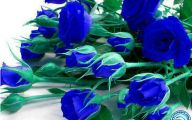 Blue Rose Flowers  2 Hd Wallpaper