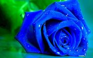 Blue Rose Flowers  3 Widescreen Wallpaper