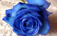 Blue Rose Flowers  4 Free Wallpaper
