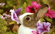 Cute Flower Wallpapers  1 Widescreen Wallpaper