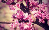 Cute Flower Wallpapers  18 Hd Wallpaper