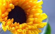 Desktop Flower Wallpapers  10 Background Wallpaper