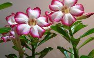 Flower Language Blue Rose  10 Cool Wallpaper