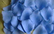 Flower Language Blue Rose  31 Free Wallpaper