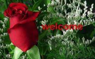 Flower Language Blue Rose  4 Background Wallpaper