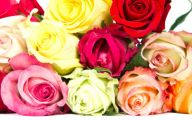 Flower Meaning Yellow Rose  14 Widescreen Wallpaper