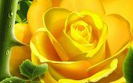 Flower Meaning Yellow Rose  4 Widescreen Wallpaper