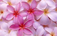 Flower Wallpapers  244 Background Wallpaper