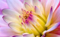 Flower Wallpapers Desktop  4 High Resolution Wallpaper