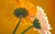 Flower Wallpapers For Desktop Background  2 Hd Wallpaper
