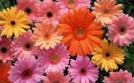 Flower Wallpapers For Desktop Free Download  1 Cool Wallpaper