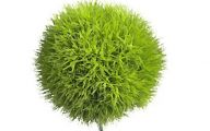 Green Dianthus Flowers  18 Background