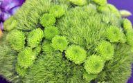Green Dianthus Flowers  19 Free Wallpaper