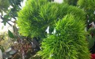Green Dianthus Flowers  9 Free Wallpaper