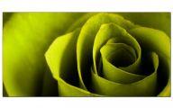 Green Flowers Canvas  3 Free Wallpaper