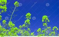 Green Flowers Dream  18 Desktop Wallpaper
