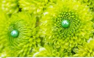 Green Flowers Dream  34 High Resolution Wallpaper
