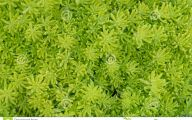 Green Flowers Dream  7 Background Wallpaper