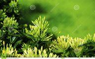 Green Flowers Dream  8 Cool Hd Wallpaper