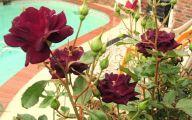 Midnight Blue Rose Flower  1 Wide Wallpaper