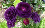 Midnight Blue Rose Flower  18 Cool Wallpaper