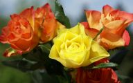 Picture Flower Rose Red Yellow  9 Cool Wallpaper