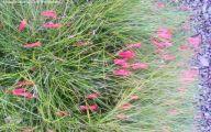 Pink Flowering Bushes And Shrubs  21 Desktop Background